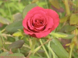 teresa-ramos-poesia