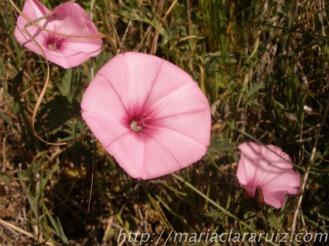 verano - psicoterapia y otras posibilidades