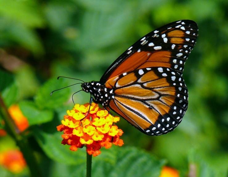 18-diciembre-dia-migrante-pedro-guerra-monarca