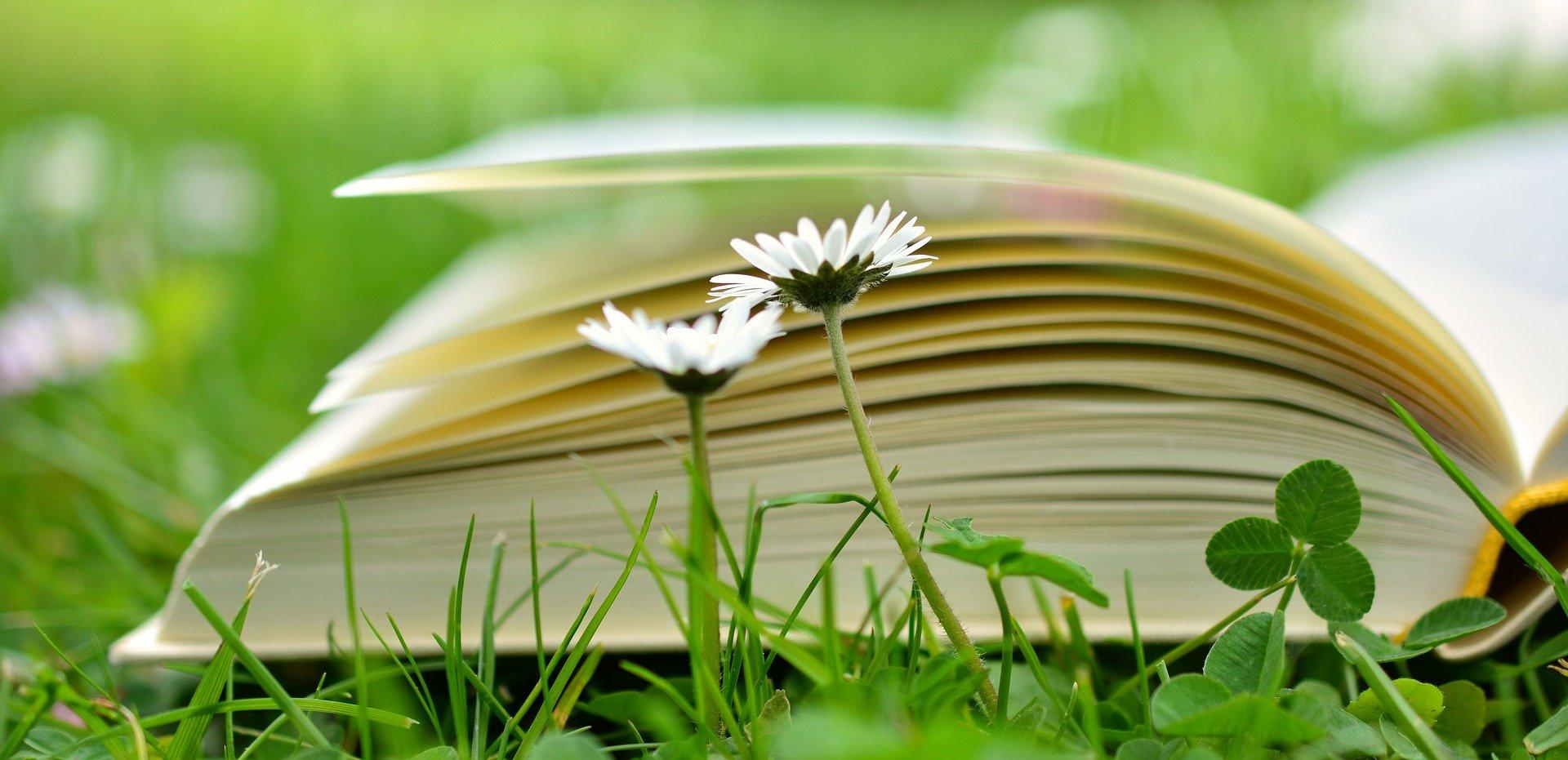 Psicólogo en Denia, entra en mi blog e infórmate sobre las diferentes modalidades de la Psicoterapia.